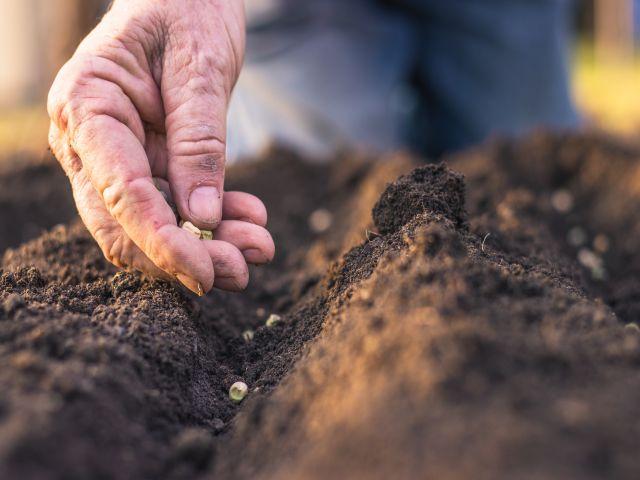 Fruitful Labor Produces More Fruit